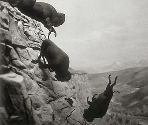 falling-off-a-cliff-buffalo-nb18794